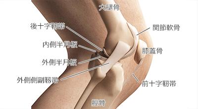 膝 の 裏 曲げる と 痛い